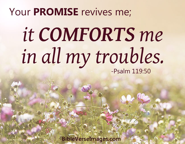 Comforting Bible Verse - Psalm 119:50