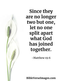 Bible Verse about Marriage - Matthew 19:6