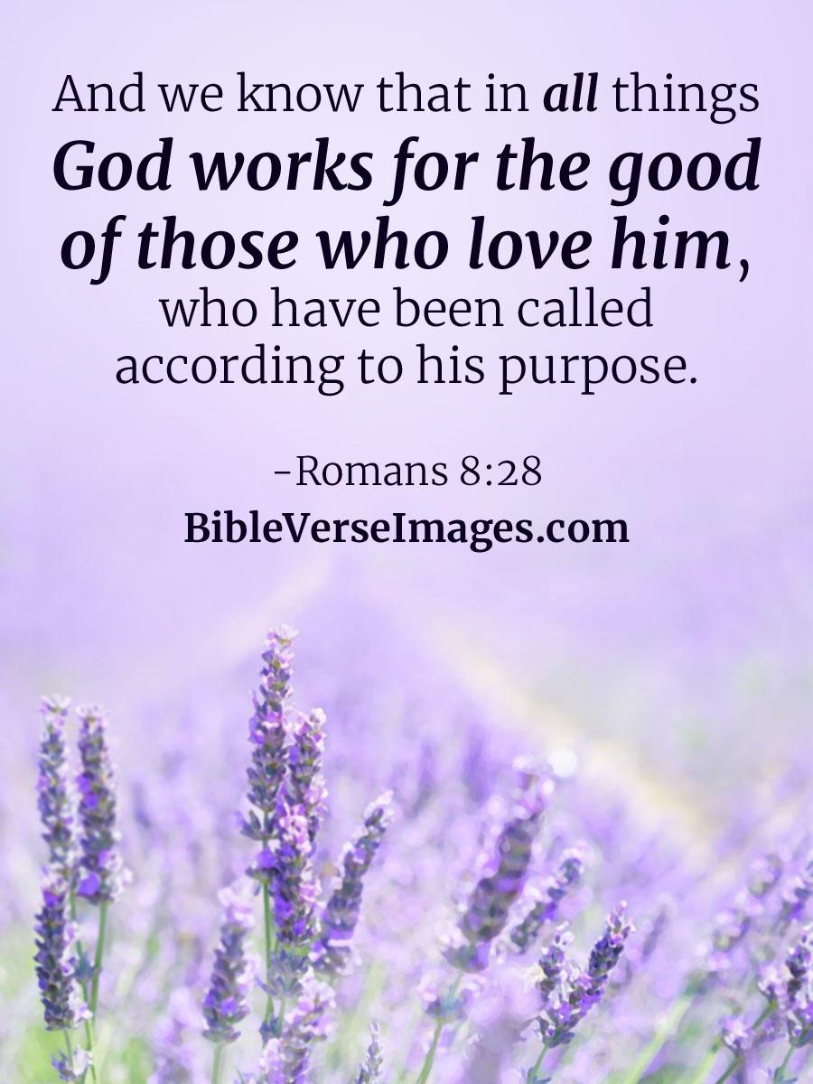 romans 8 28 best bible verse bible verse images
